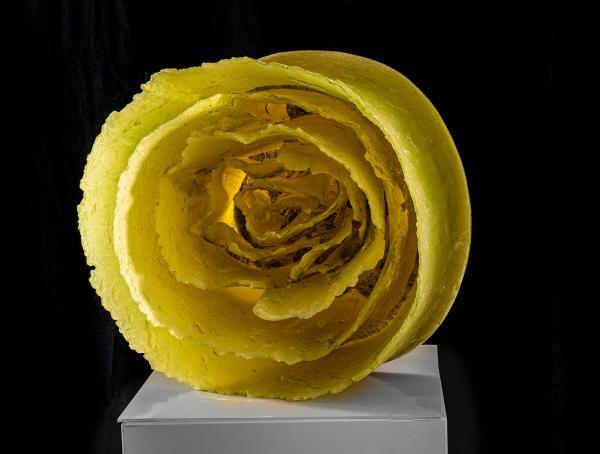 Palova-YellowRose2